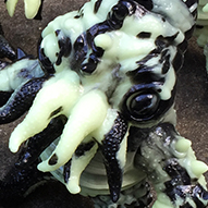 Kaiju TriPus (2.0) special Marbled Glow in Dark & Black Cow